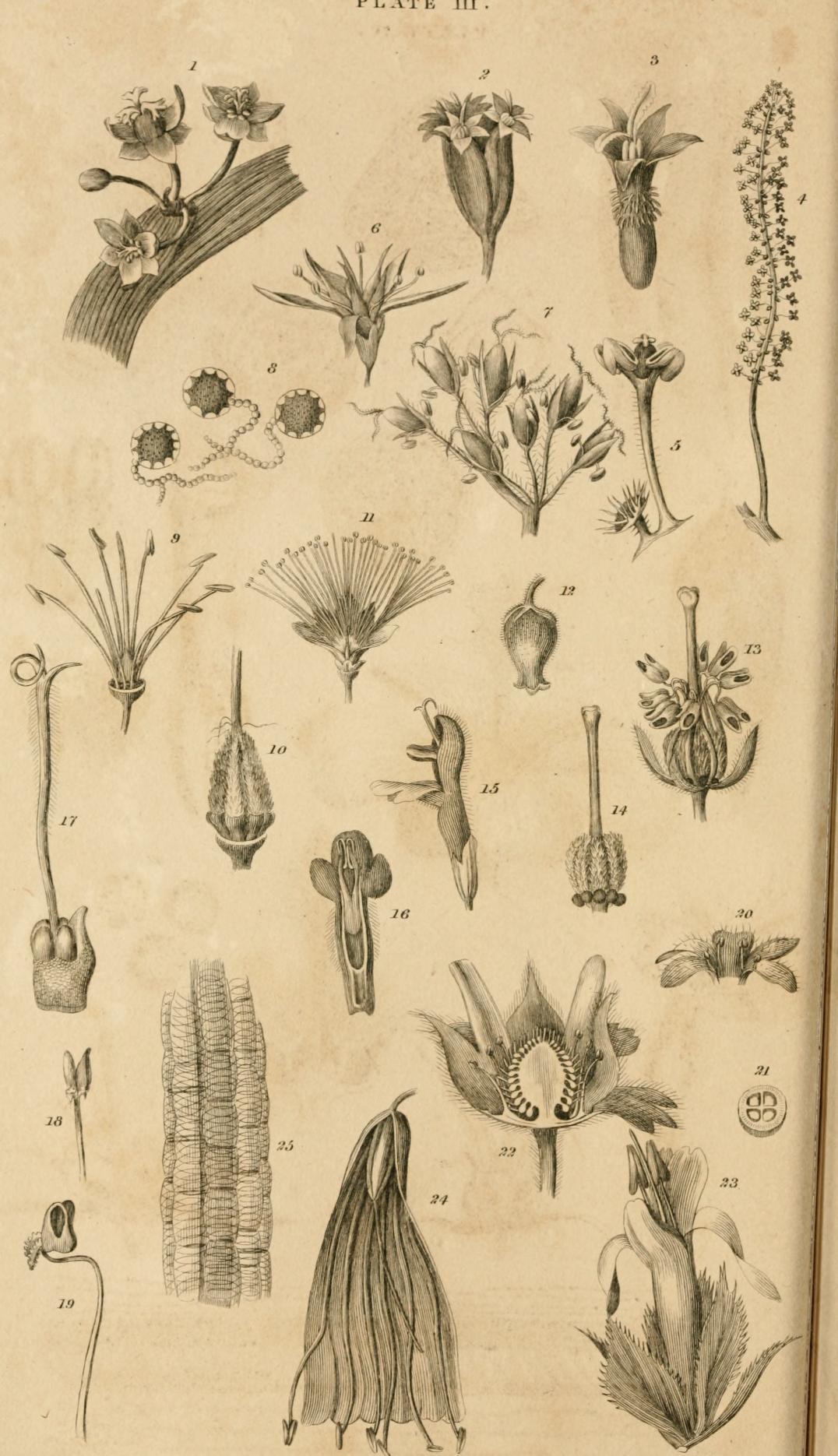 monceau fleurs six fours
