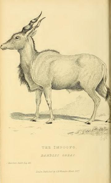 wolf oder vaillant