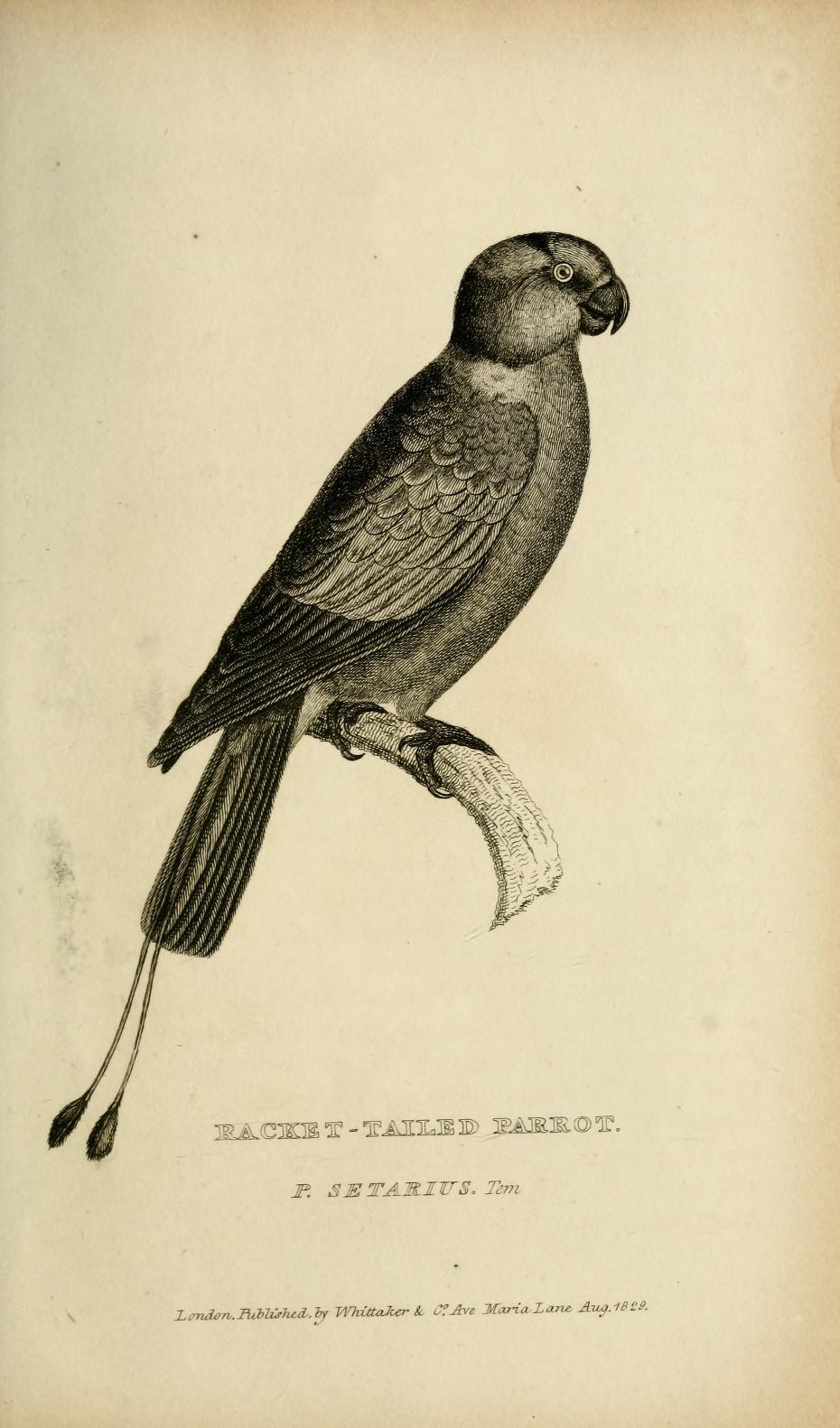 Darwin\'s Beagle Library