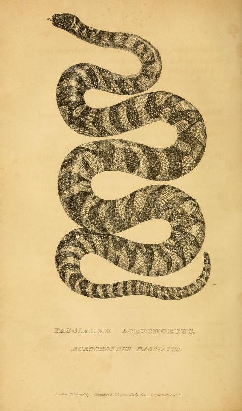 python 2 perseus english