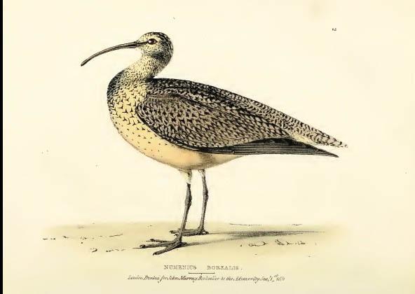 oiseau icterus jamacaii