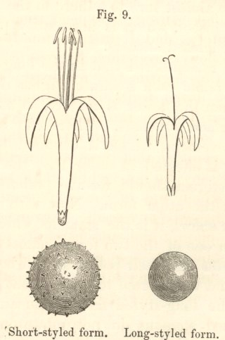 Darwin, C  R  1877  The different forms of flowers on plants