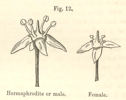 Unisexual flowers examples of simile
