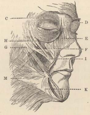 Darwin, C  R  1890  The expression of the emotions in man