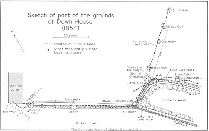 Sketch of part of the grounds of Down House (1854)