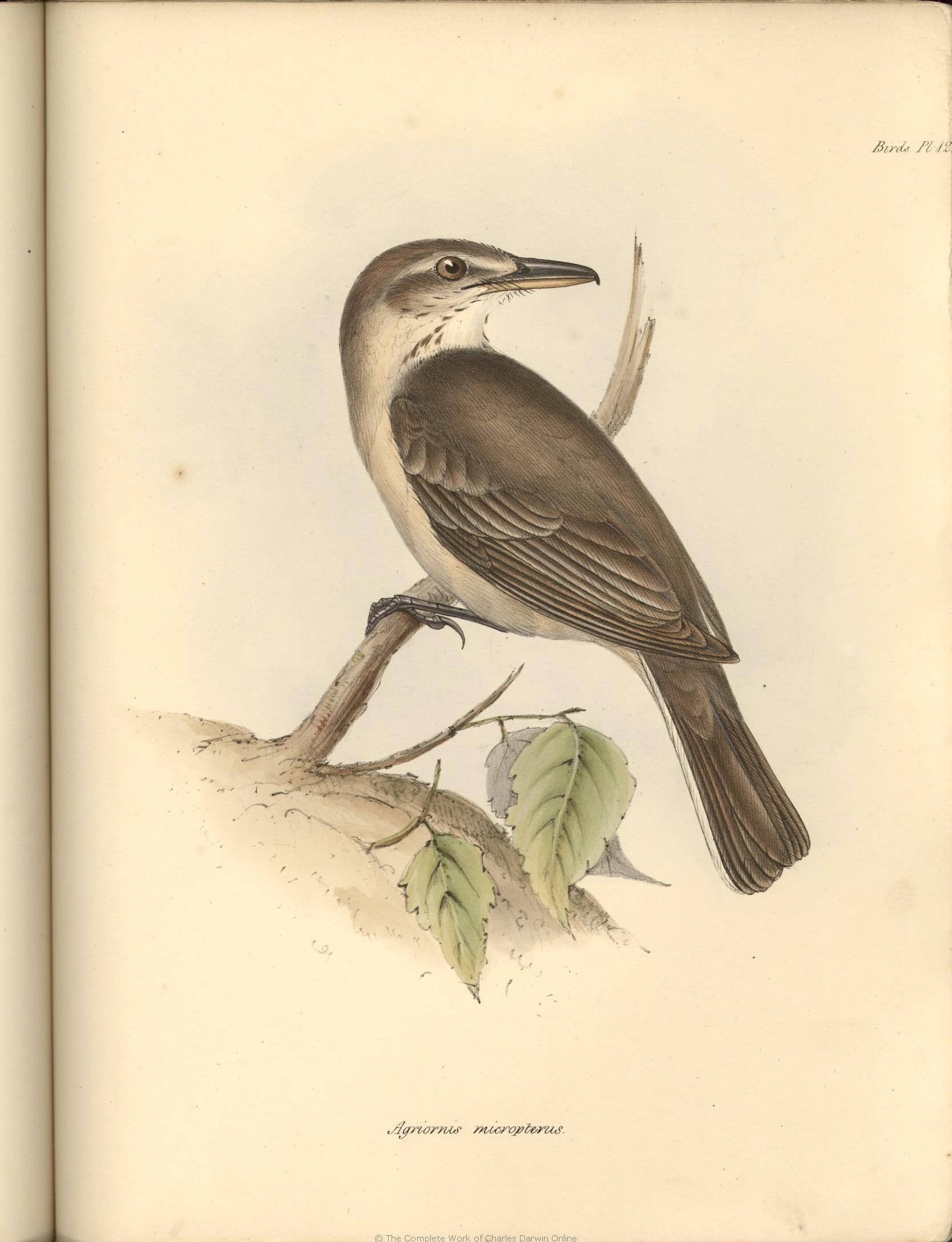 4af8cc46f Darwin