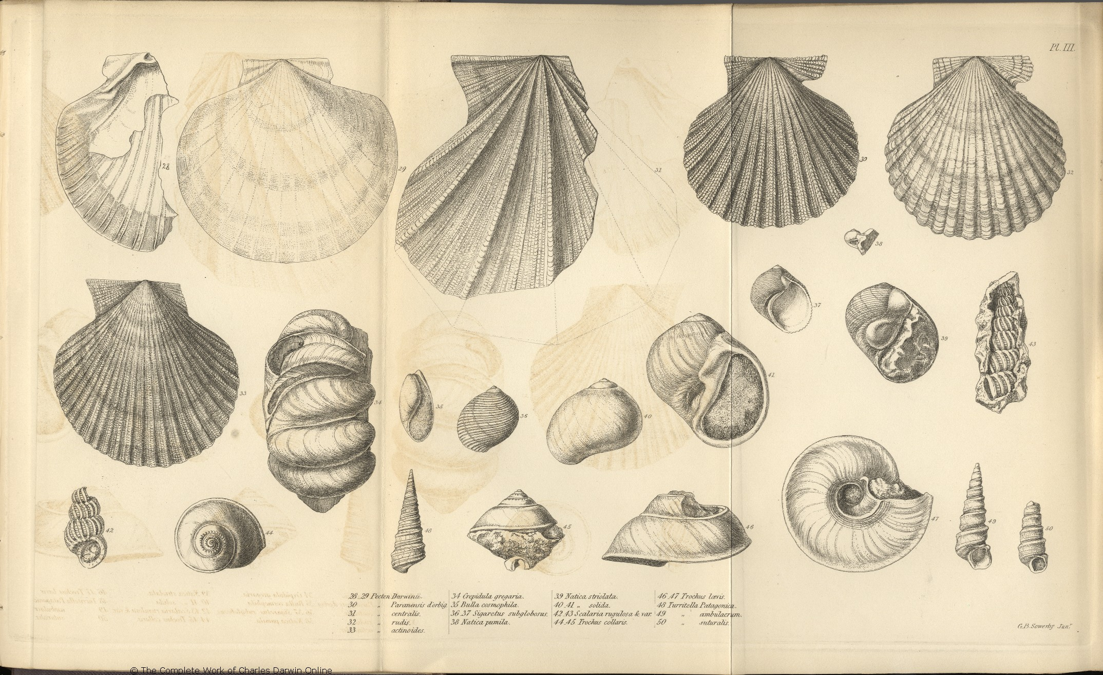 Image result for charles darwin drawings