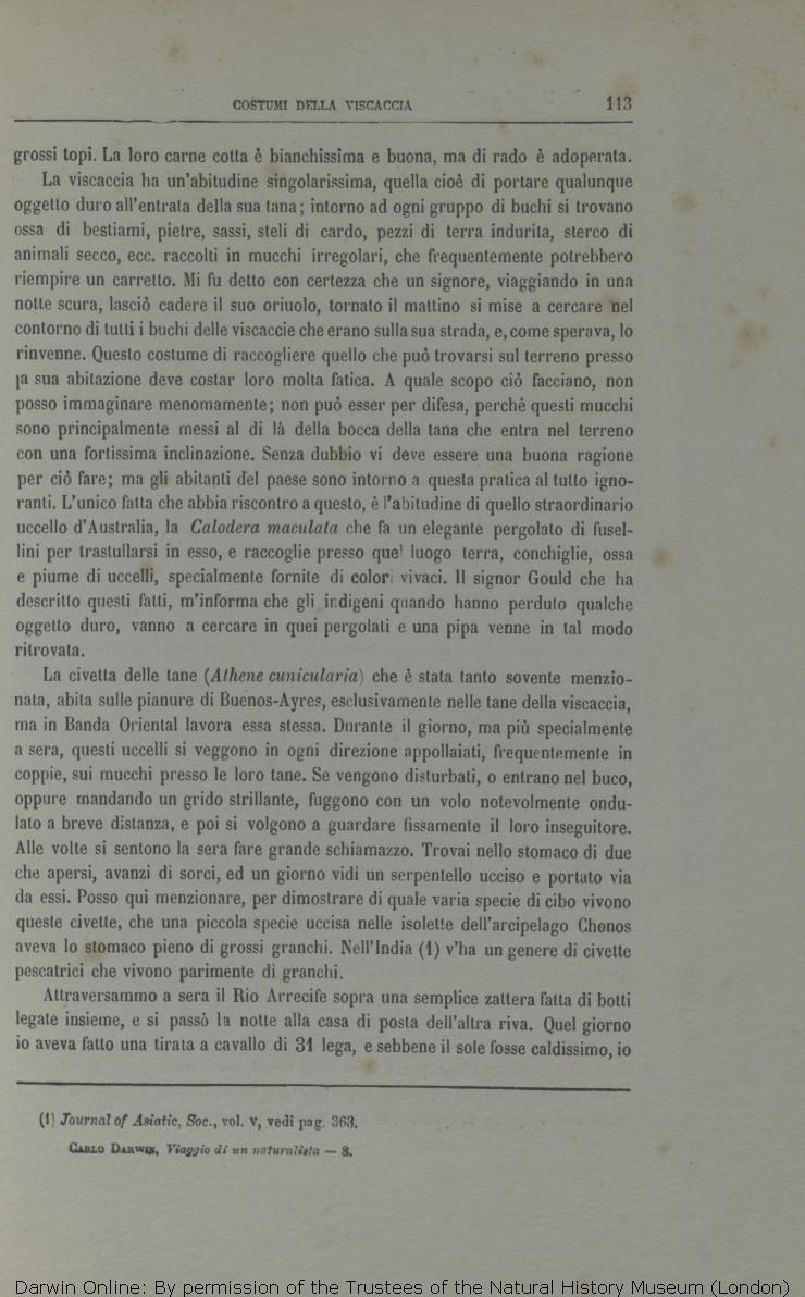 Ba4 a fascia costume da bagno rete Ottica Nero-perfetta abbronzatura-DI OCTOPUS NUOVO