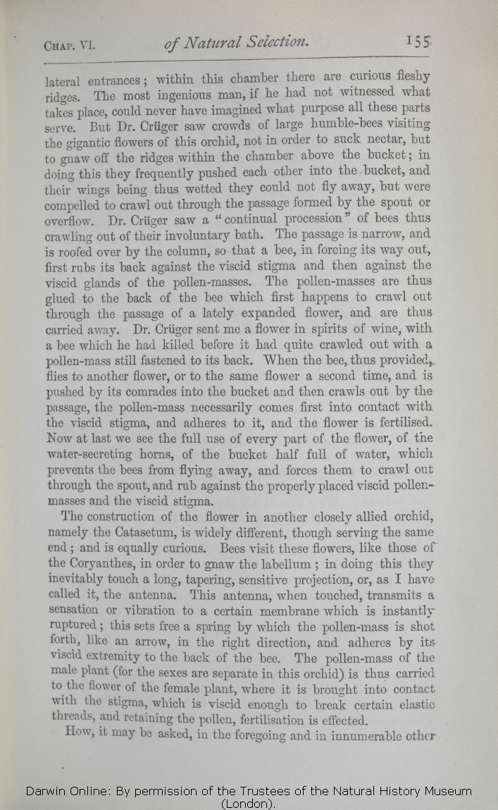 Darwin C R 1872 The Origin Of Species By Means Natural Wet Folding Little Terrier Paper Unlimited Selection Or Preservation Favoured Races In Struggle For Life