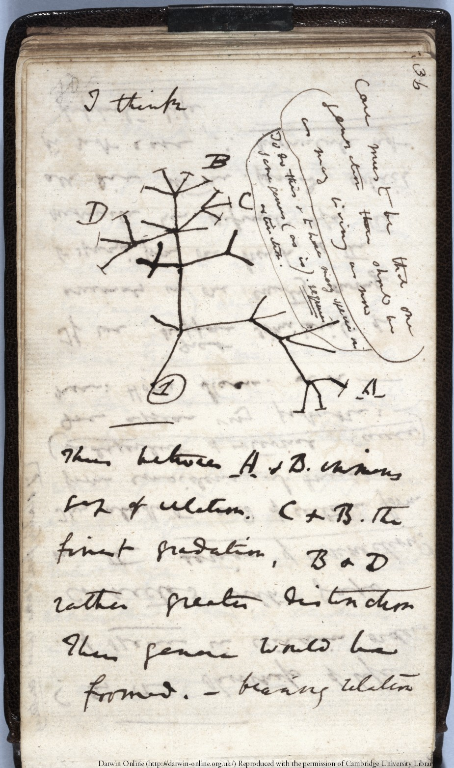 DarwinArchive_1837_NotebookB_CUL-DAR121.-_038.jpg