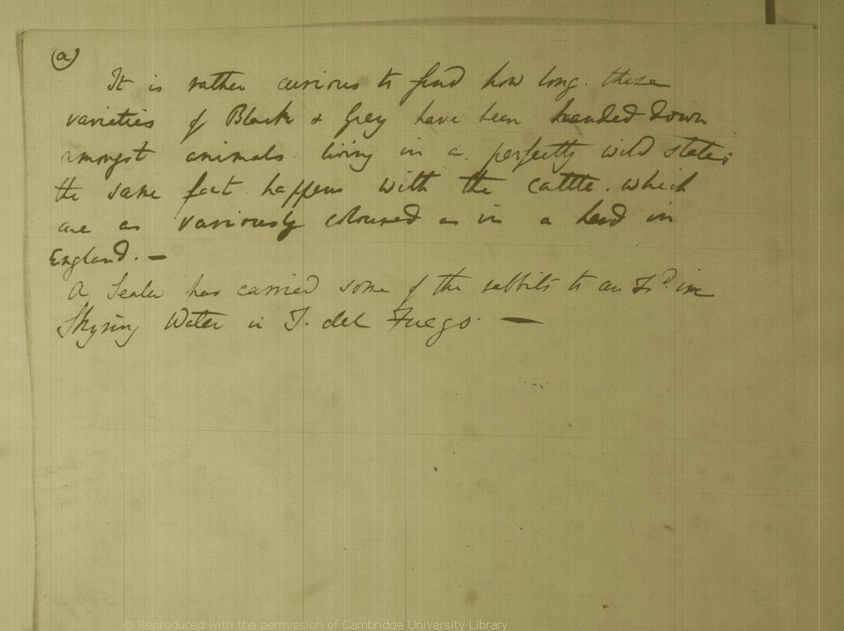 Charles Darwin's Beagle animal notes (1832-33)] CUL-DAR29 1