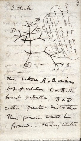A page from Darwin's Notebook B showing the first evolutionary tree diagram.