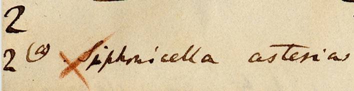 An extract from Darwin's barnacle notes.
