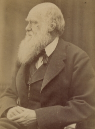 essay questions about charles darwin
