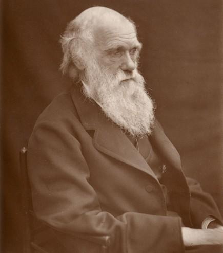 [Image: 1878Darwin.jpg]