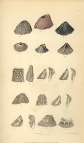 an introduction to the life and work by charles darwin In this lesson we explore the life and voyages of the 19th-century british naturalist charles darwin and his formulation of the theory of natural selection.